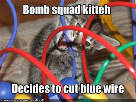 Funny-pictures-bomb-squad-cat-chooses-the-blue-wire